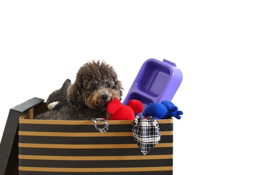 Cara Bantu Anjing Adaptasi setelah Pindahan Rumah ke Surabaya